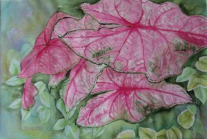 Pink Caladium-Watercolor by Marilyn Peretti